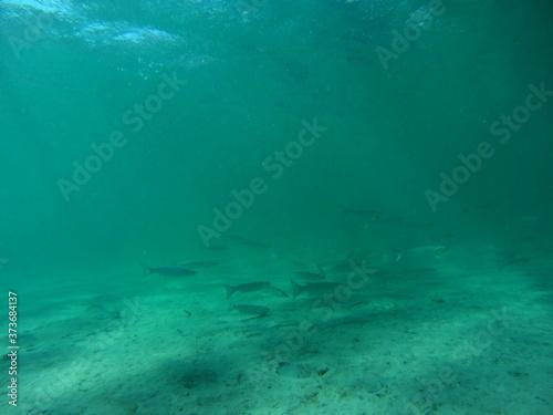 Leinwand Poster Sott'acqua nel mare