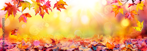 Fototapeta Autumn Abstract - Colorful Leaves With Defocused Park In Background At Sunset
