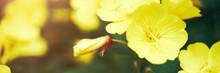 Yellow Flower Background. Summer Floral Backdrop. Jungle Bush Wallpaper. Macro Blossom. Copyspace. Banner. Season Park Leaf. Green Garden
