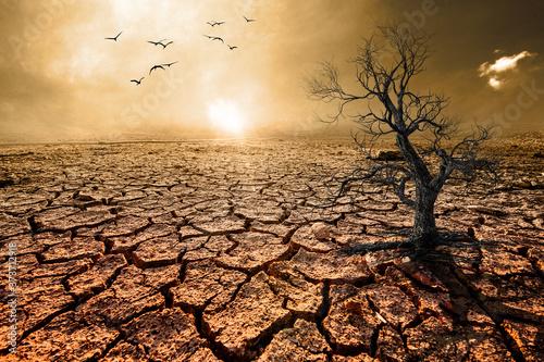 Fototapeta Dead trees and dry land, broken soil