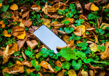 Lost Phone On The Leaves