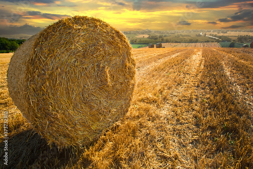 Fototapeta Hay bales in a meadow in a summer evening sunset