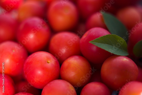 fresh red cherry plums with green leaves Wallpaper Mural