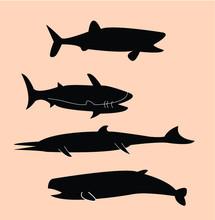 Sea Animals, Fish