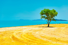 Green Tree In Desert And Landscape With Island On Blue Sea. Thailand, Ko Lanta Island