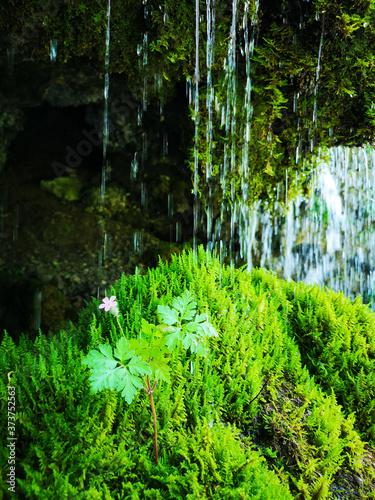 Fototapeta forest in the morning obraz na płótnie