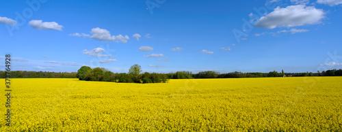 Panoramique champ de colza au petit bois, Seine-et-Marne en Île-de-France, Franc Billede på lærred