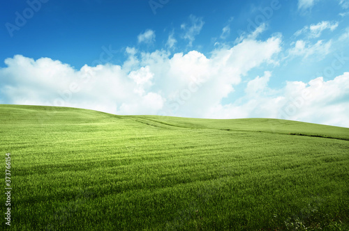 Foto field of grass and perfect blue sky