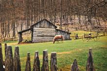Horse In Field In Front Of Vin...