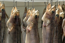 Salted Fish Dries Suspended By...