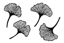 Vector Set Of Hand Drawn Ginkgo Biloba Leaves. Black Contour Isolated On White Background