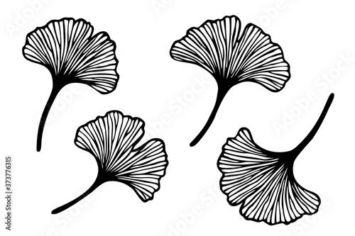 Vector set of hand drawn ginkgo biloba leaves Fototapeta