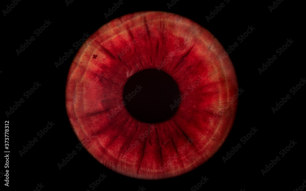 Fototapeta red human iris