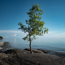 Lonely Tree On The Shore Of Lake