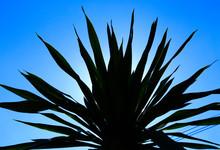 Aloe Vera Plant On Blue Sky