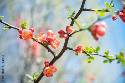 Fotografiet 유혹적인 빨간 꽃
