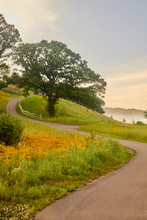 Vertical Photo Of Path Winding Through A Wild Field Of Yellow Flowers And Trees With Fog In The Background