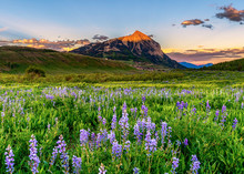 Crested Butte Wildflower Sunset In Colorado