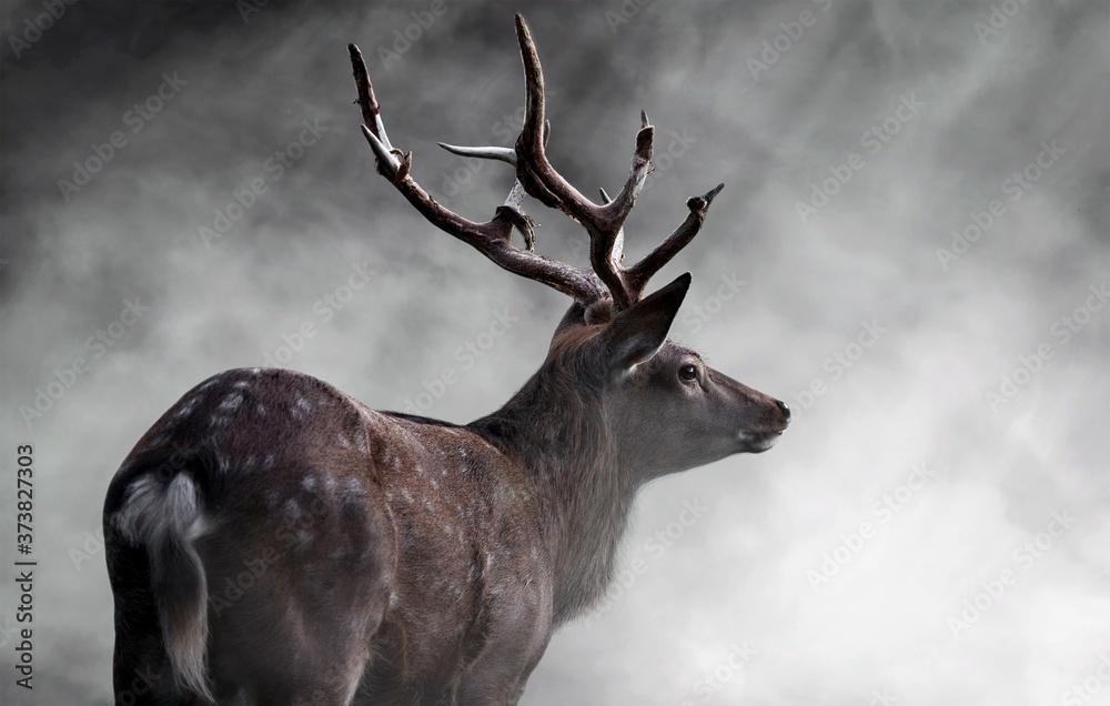 Fototapeta red deer stag