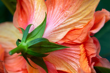 Colorful Macro Abstract Textur...