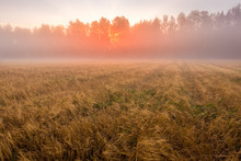 Sunrise In An Agricultural Fie...