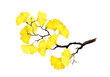 Autumn twig with yellow leaves. Watercolor illustration