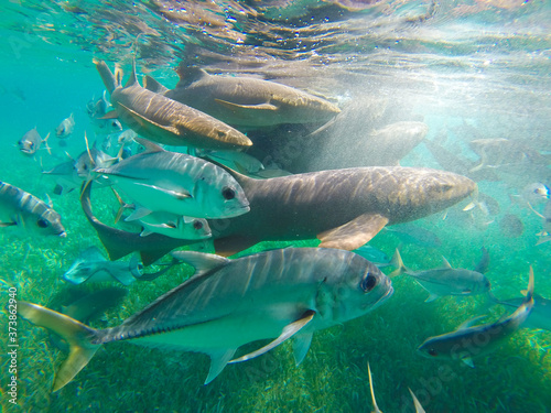 Closeup shot of various marine wildlife taken from underwater Fototapeta