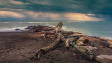 Tree Trunk On Sea Rocks
