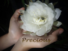 Life Is Precious Concept. White Big Midnight Flower Or Easter Lily Cactus Blossom In Hands, With A Single Word Written On Palm.