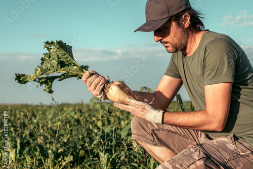 Leinwand Poster Male farmer posing in sugar beet field