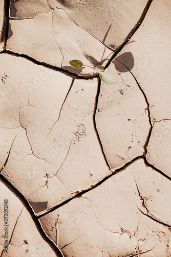 Green plant growing in dried cracked ground Canvas Print