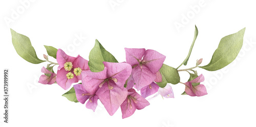 Cuadros en Lienzo A pink bougainvillaea arrangement hand painted in watercolor isolated on a white background