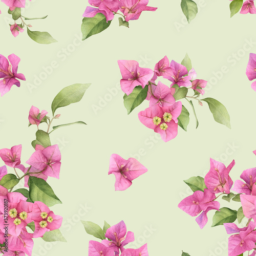 A floral seamless pattern of the pink bougainvillea and green leaves hand drawn in watercolor isolated on a light green background Fototapeta