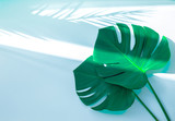 Tropical palm tree leaf and hat on a white background. Vibrant minimal fashion concept
