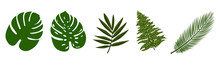 Collection Of Tropical Leaves ...