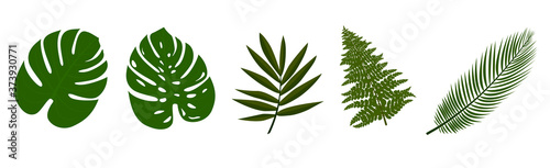 collection of tropical leaves isolated on white vector illustration Canvas