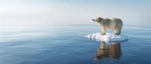 Polar Bear On Ice Floe. Melting Iceberg And Global Warming.