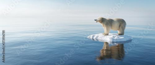 Fotografija Polar bear on ice floe. Melting iceberg and global warming.