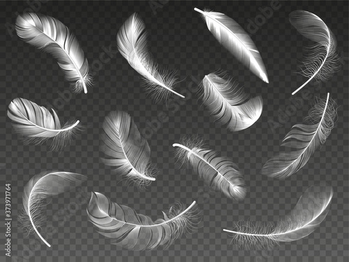 Fotografering White realistic feather