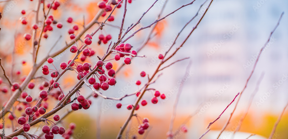 Beautiful panoramic autumn scenery with colorful leaves, berries and bokeh background