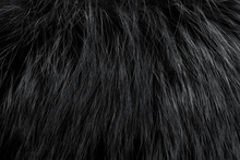 Black Fur As Background. Close Up