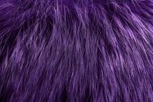 Purple Fur As Background. Close Up
