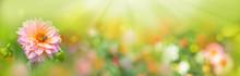 Beautiful Flower Meadow -  Dah...