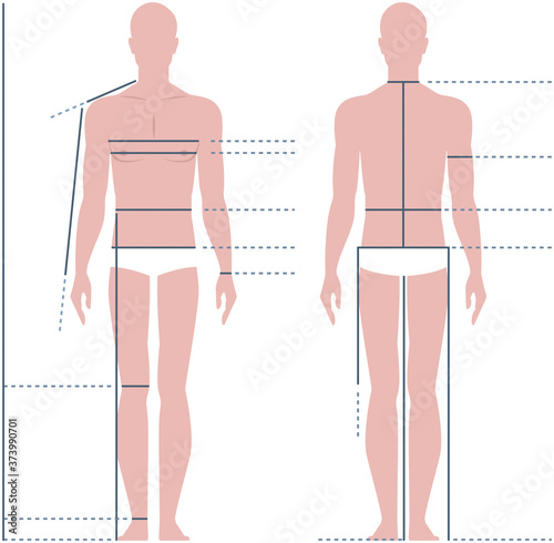 Male body for measuring the size vector illustration Fotobehang