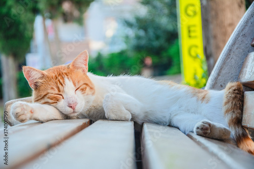 Stray cat sleeping on bench in close-up Canvas Print