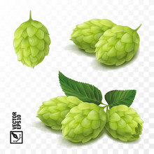 3d Vector Realistic Hop Set, For Advertising Beer And Cosmetics