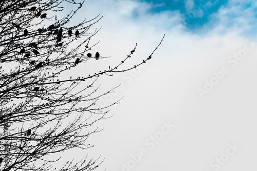 Minimalist Silhouetted Birds in Tree Wallpaper Mural