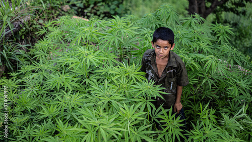 A little poor boy working in the fields, growing weed plants Poster Mural XXL