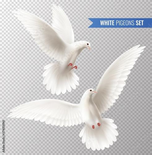 Fotografie, Obraz White Dove Set