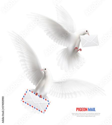Obraz na plátně White Pigeons Set